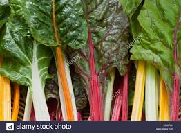 Organic Kitchen Garden Rainbow Chard Swiss Beta Vulgaris Subspecies Cicla Leaf Foliage