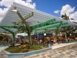 imagem de Tucano+Bahia n-19