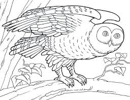 Animal Barn Owl Coloring Pages Animal Coloring Pages Of
