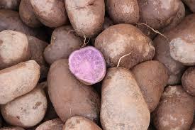 Risultati immagini per patate viola