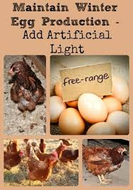 Maintain Winter Egg Production Add Artificial Light