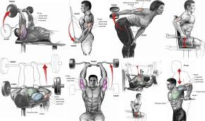 Tricep Workout Chart Tricep Workout Routine