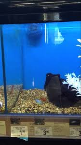 petco freshwater fish.  Petco Petco Fresh Water Fish Display And Prices Intended Freshwater Fish H
