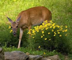 ways to keep deer and rabbits out of
