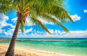 Image result for beach sunshine