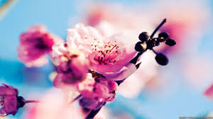 early spring wallpaper hd. Simple Early Videos Inside Early Spring Wallpaper Hd