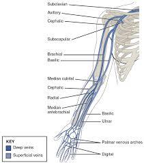 20 5 Circulatory Pathways Anatomy And Physiology