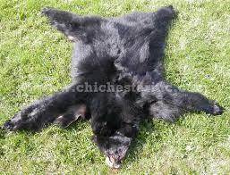 black bear rugs or bearskins or bear fur