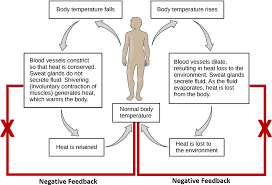 1 Homeostatic Regulation Of Temperature In Humans