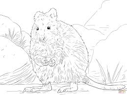 Small Picture Quokka coloring page Free Printable Coloring Pages