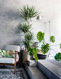 Plant Interior Design Interesting Decorating Ideas