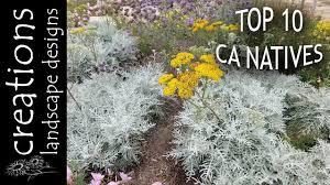 top 10 california native plants creations landscape designs