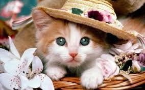 cute cat wallpaper backgrounds. Exellent Wallpaper HD Wallpaper  Background Image ID20658 1600x1200 Animal Cat To Cute Backgrounds A