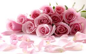 light pink rose flowers wallpaper. Light Pink Roses Wallpaper Is Available For Free Download View Full Size And Rose Flowers
