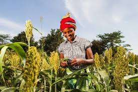 Image result for african farming
