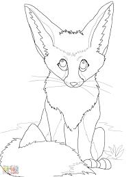 Cute Baby Fennec Fox Wiring Diagram Database