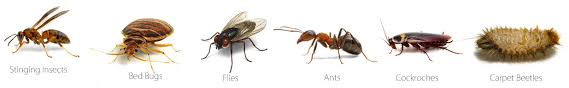 Image result for pest control san antonio