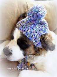 Crochet Dog Hat Pattern Impressive Free Crochet Pattern A Silly Hat For My Silly Dog Httpwww
