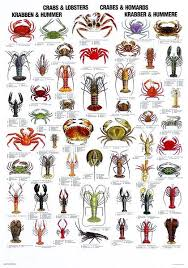 Crab Species Chart Pin By Madison Johnson On Hive Aliens Fish Chart Crab