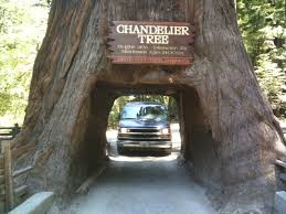 i d seen pictures of cars driving through these massive trees and figured our van was way too big as i crept up to the opening it