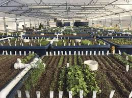 Eastern Adds Organic Usda Certification To Aquaponics Agribusiness