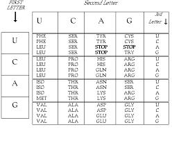 Universal Genetic Code Chart A Circular Code Table