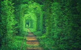 green, Tunnel, Path, Nature, Forest ...