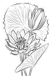 Blauwe Lotus Kleurplaat Gratis Kleurplaten Printen