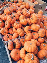 Aesthetic Pumpkin Wallpapers - Top Free ...
