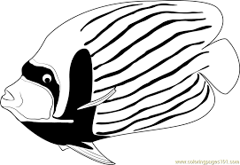 Small Picture Angelfish Coloring Page Free Other Fish Coloring Pages