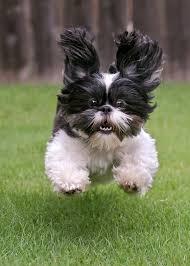 Собаки в сравнении Images?q=tbn:ANd9GcQsIeUIoR9N8ZKDrn7XiQgjsny4asbMR_FfuwmcUQI0EpM6LXjh2g