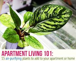 perfect office plants. VIEW PHOTO IN GALLERY Perfect Office Plants