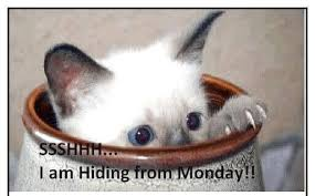 Image result for happy monday cat images