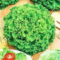 Купить <b>семена салата</b> в Новоуральске, сравнить цены на <b>семена</b> ...