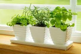 indoor herb gardening how to bonnie