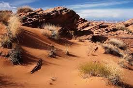 desert biome desert dry ecosystems eng hot tp glogster edu interactive multia posters