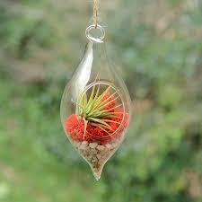 teardrop hanging glass vase air plant terrarium