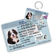 And Pooch Tags Wallet Cute License Dog 1 Ontario Driver Card Personalized Canada Id Pet