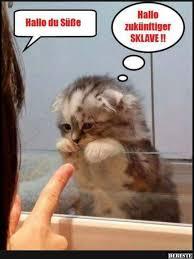 Lustige Spruche Katzen