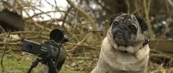pug gif. Beautiful Gif Life Pug GIF For Gif T