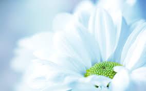 desktop background hd flowers.  Desktop Flower Wallpaper Flower Wallpaper For Desktop Background Hd Flowers E
