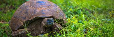 turtle vs tortoise difference and