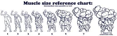 Muscle Sizes Ref Sheet By Daniel_kay Fur Affinity Dot Net