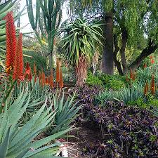 Small Picture water wise indigenous South African garden WESTHOUSE GARDEN