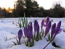 Image result for Early spring pictures