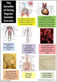 best exercise benefits images benefits of benefits of aerobic exercises learnhandyhealthandwellnesstips com
