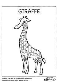Giraffe Coloring Printable Giraffe Coloring Page Giraffe Colouring
