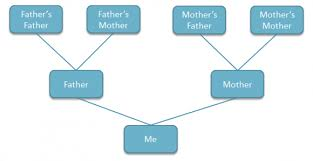 powerpoint family tree template how to create a family tree in powerpoint using shapes
