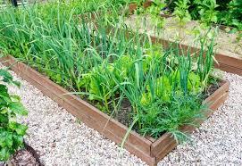 14 best companion plants for garlic 6
