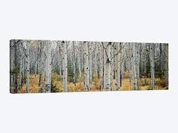 aspen trees in a forestalberta canada by panoramic images 1 piece canvas art  on 3 piece wall art canada with aspen trees in a forestalberta canada canvas wall art icanvas